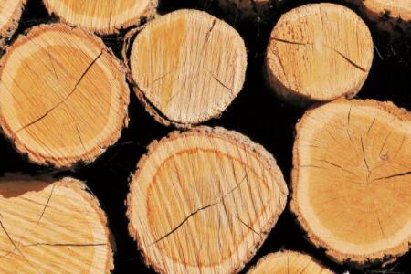 榆木or橡木?看完各己的优缺隐才知道哪个更好
